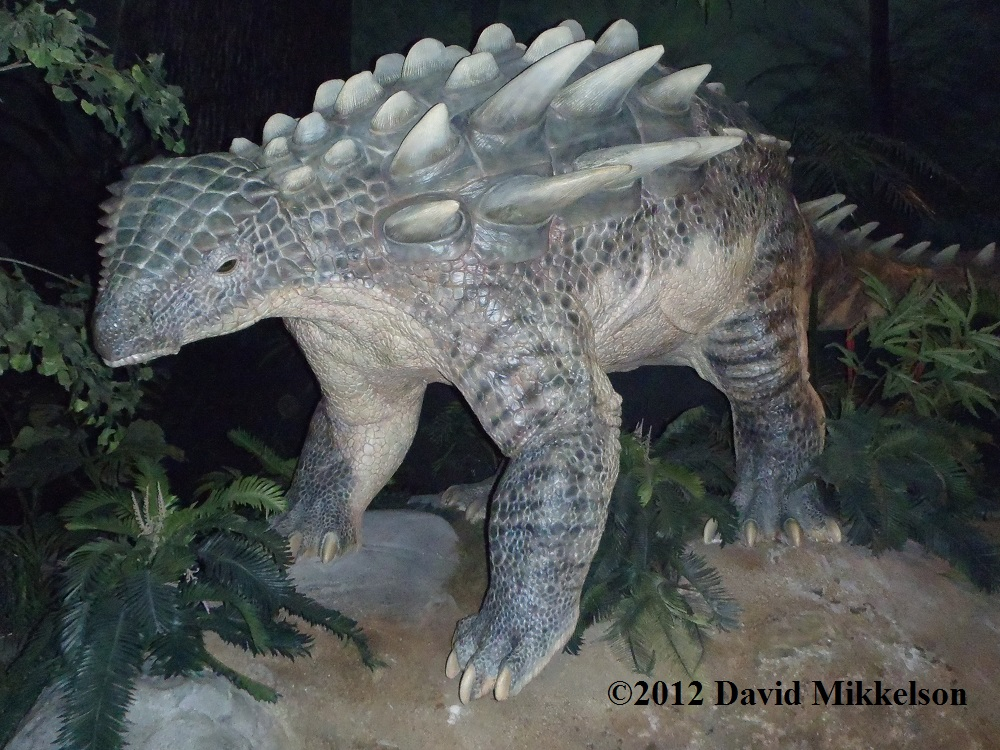 Ankylosaur - photo credit, David Mikkelson, 2012.  Used with permission