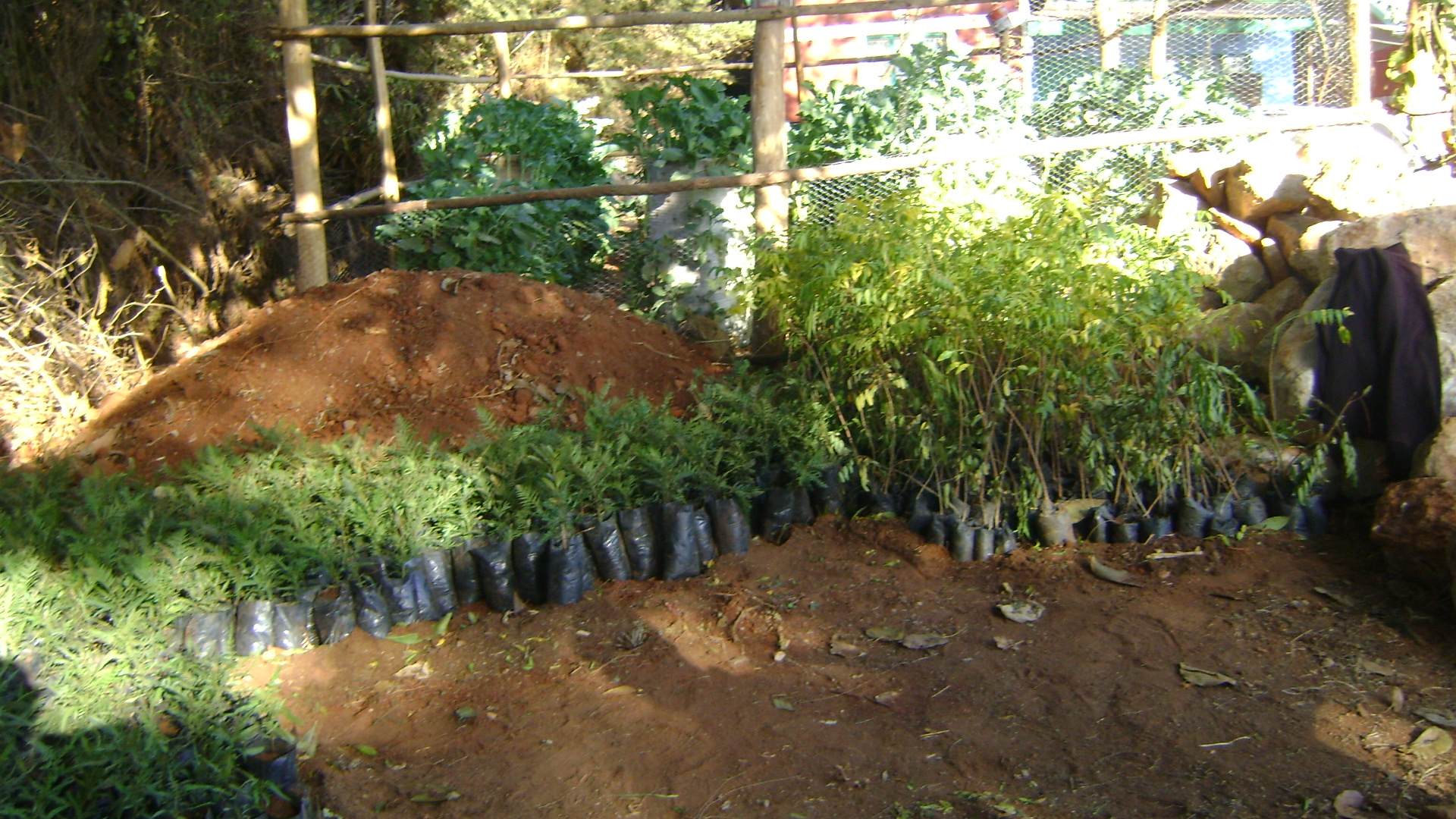 Seedlings bought for planting this season
