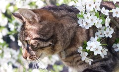 Striped cat in blossoms, photo credit: Martin Pius Mueller