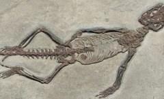 Small Complete Fossil Vertebrate