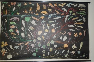 Evolutionary Tree of Life Poster