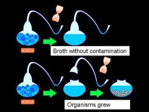 Louis Pasteur S Swan Flask Experiments