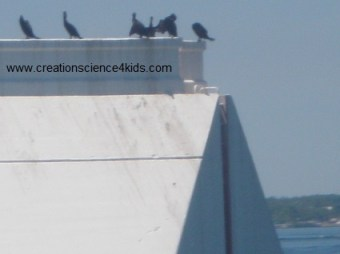 Cormorants off Mackinac Island