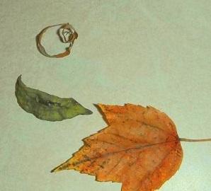 CS4K-Curled-Leaves-2