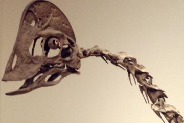 800px-ChirostenotesHeadCloseUp_RoyalOntarioMuseum