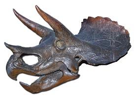 Triceratops from Wikipedia (Zachi Evenor)