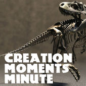 Creation Moments Minute iTunes link
