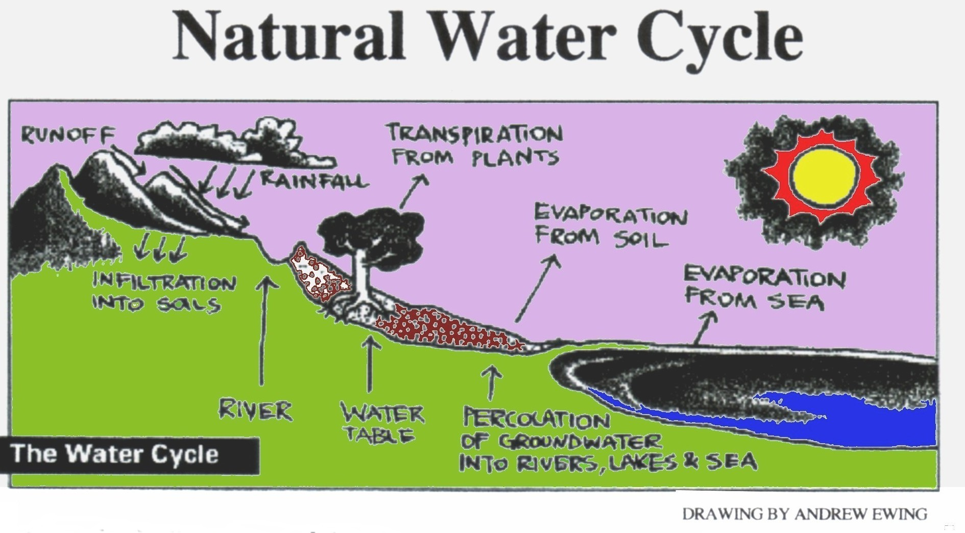 water cycle diagram with questions 110cc chinese quad bike wiring archives creation science 4 kids