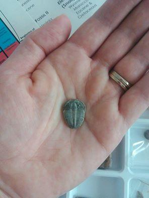 my very own Trilobite!