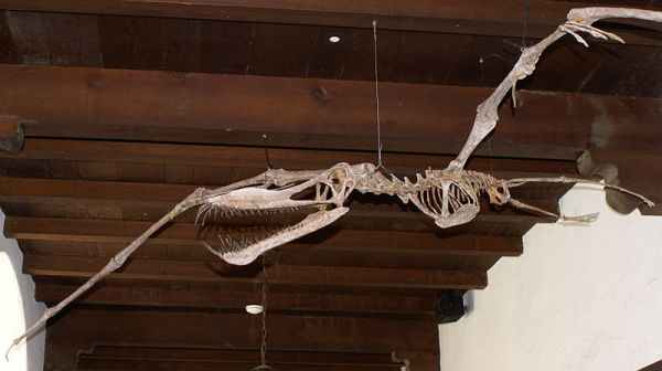 African Pterosaur, WikiCommons