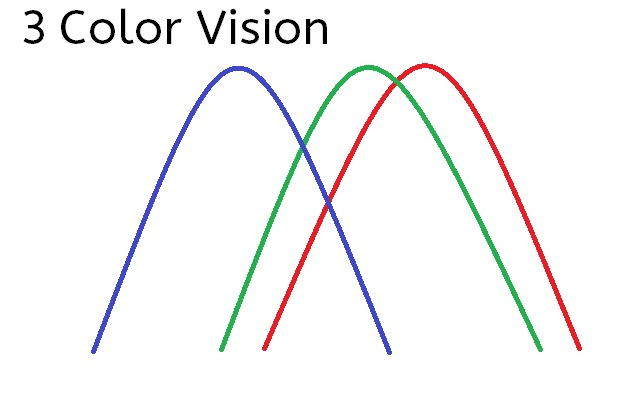 Wave lengths showing 3 color vision
