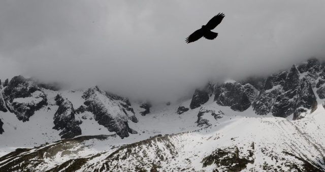 Eagle soaring above snowy mountains