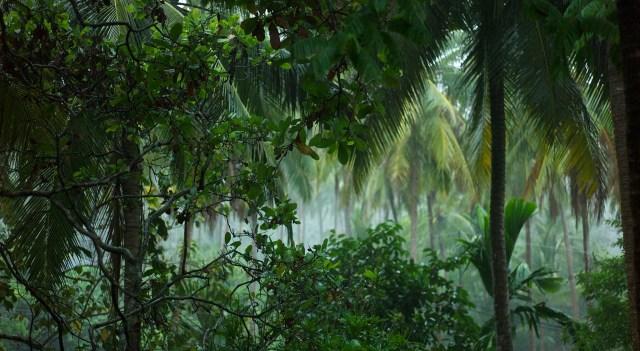 Thai rain forest, photo credit: Michael Cory