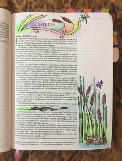 Jackie Mattingly illustrated cattails 3 ways to illustrate the first page of Exodus, the birth of baby Moses left in the river.