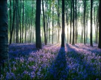 35 Breathtaking Forest Wallpaper Designs - Creative ...