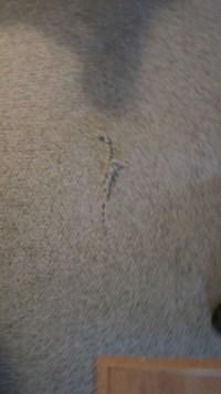 DogDamageBerberBefore3  Creative Carpet Repair