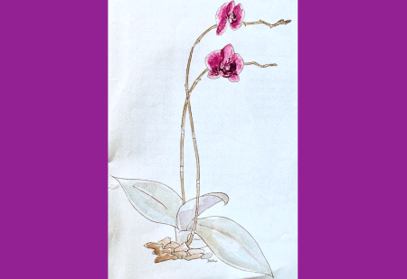 du siehst die fertige Illustration der Orchidee