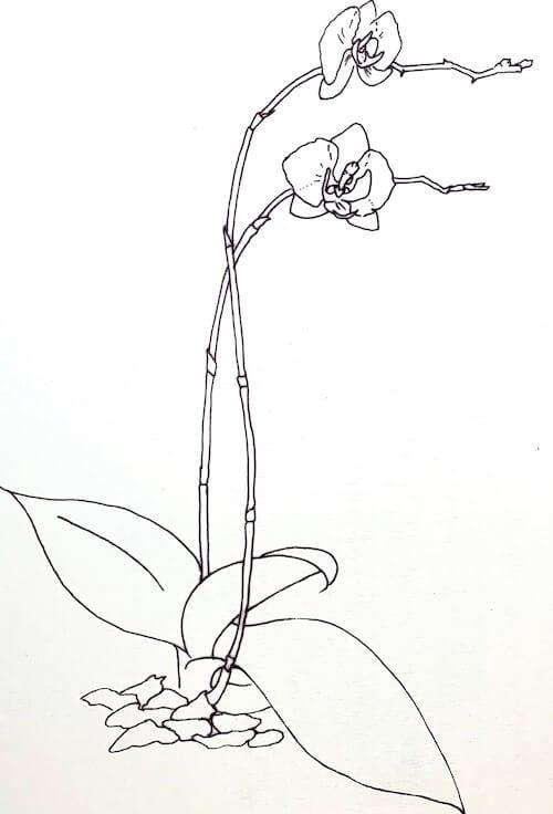 Schritt-Anleitung Orchidee Vorlage