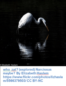 who  zat? (explored) Narcissus maybe? By Elizabeth Haslem https://www.flickr.com/photos/lizhaslam/5566379503/ CC BY-NC