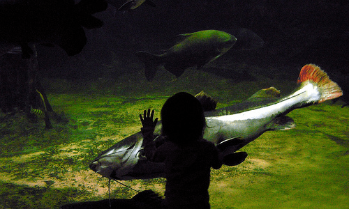 Photo: Vivian and the Giant Fish by Alan Bruce