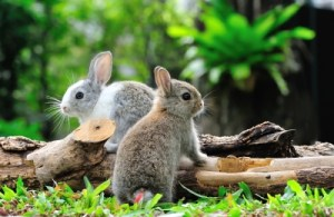 cute baby rabbits caption