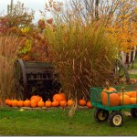 Pumpkin Week!:  Roasted Pumpkins with Bacon and Brown Sugar
