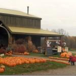 Pumpkin Week!: Pumpkin Brulee