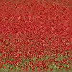In Flanders Fields: Lest We Forget