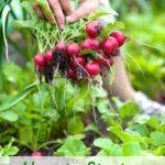 How to Start a Vegetable Garden – Tips for Beginners