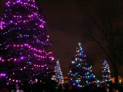 Garvan Gardens holiday lights