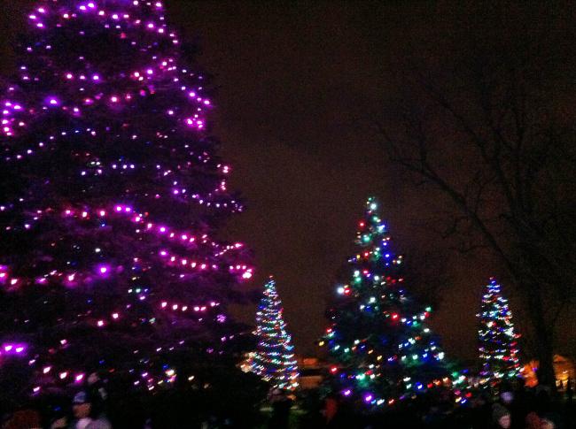 Garvan Gardens holiday lights