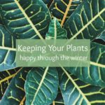 Best Tips for Keeping Your Plants Happy In Winter