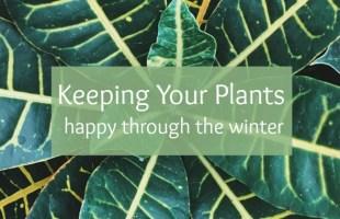 keeping plants happy in winter