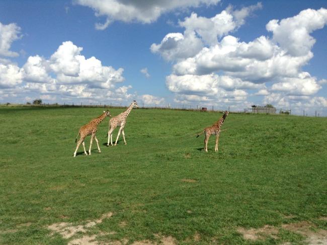 the wilds safari park cumberland ohio
