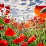 Ways to Teach Kids about Remembrance Day