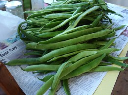picture of a heap of green runner beans