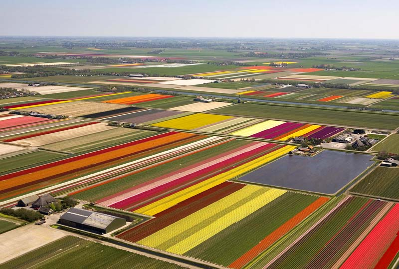 tulipspa0605_800x539