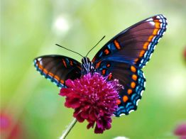 animals-other-colorful-butterfly