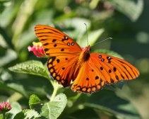 butterfly-world
