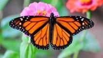butterfly_appeal_2015