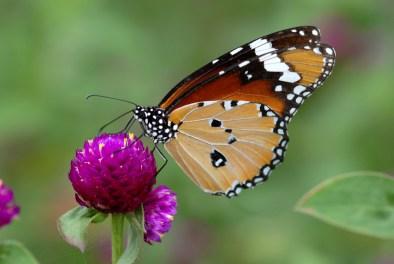 nature-s-pure-delight