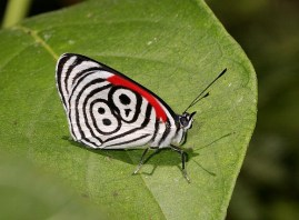 the-world_s-top-10-most-amazing-butterflies-3