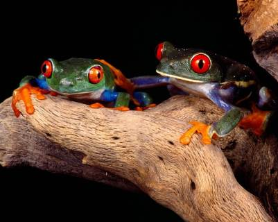 25 Most Beautiful Animals (5)