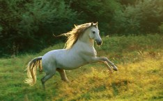 horse-wallpaper-horse-runs-in-the-forest_1920x1200_95845