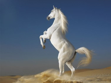 White-Horse-best-computer-backgrounds-Desktop-Wallpaper-1024x768
