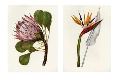 Celebrating Spring with Botanical Art Exhibition