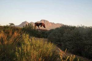 Dylan Lewis Sculpture Garden South Africa