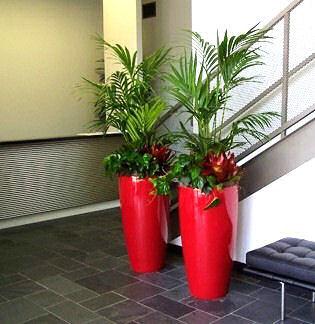 Interior Plants Creative Interior Plantscapes