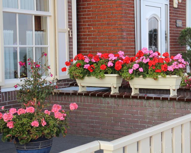 Geranium Garden Ideas Design Within Reach