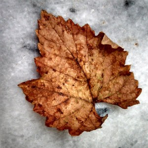 fall leaf photography
